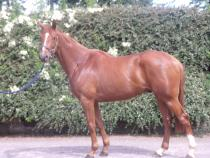 Falcarragh - Classy Bumper winner For Sale picture