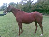Broodmare Horse for sale picture | Broodmare for sale